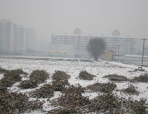 beijing snow 20061230